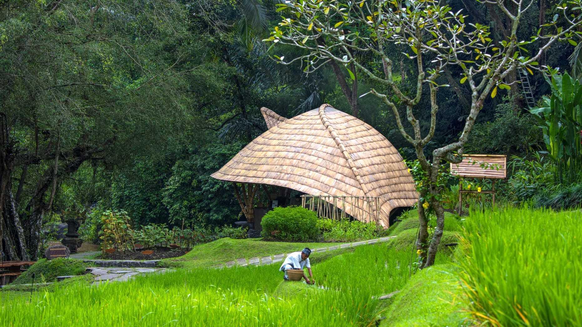 Agung Budi Raharsa | Architecture & Engineering Sokasi Bamboo Cooking Class / School - Bali Bali, Indonesia Bali, Indonesia Elevation  88745