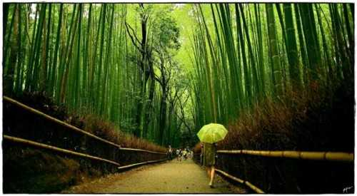 Wallpaper-Scenery Bamboo FinishesWall CoveringWallpapers