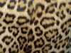 Foto produk  Wallpaper-Pattern Motif Animal di Arsitag