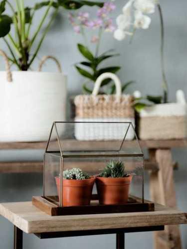 Foto produk  Boden Terrarium With Teak Tray Antique Gold di Arsitag