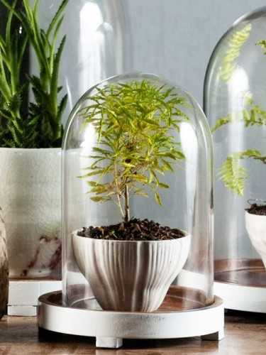 Foto produk  Kastrup Glass Dome With Wood Base (S) Natural White di Arsitag