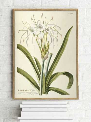 Amarylis Botanical Print With Frame 30 X 40 Cm Pine Frame DécorArt And PrintsPaintings And Prints