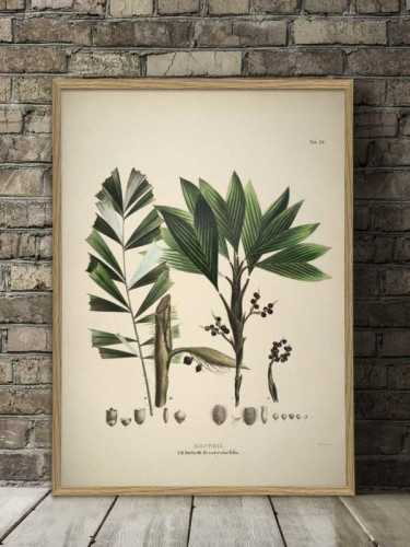 Caryota Botanical Print With Frame 50 X 70 Cm Pine Frame DécorArt And PrintsPaintings And Prints