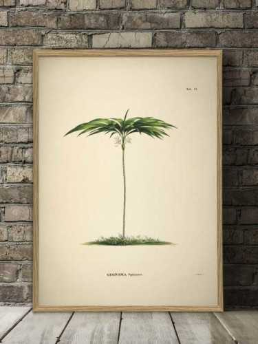 Geonoma Botanical Print With Frame 50 X 70 Cm Pine Frame DécorArt And PrintsPaintings And Prints