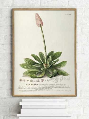 Hellebore Botanical Print With Frame 30 X 40 Cm Pine Frame DécorArt And PrintsPaintings And Prints