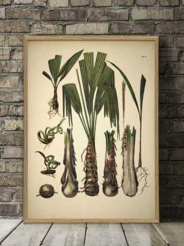 Palmarum Botanical Print With Frame 50 X 70 Cm Pine Frame DécorArt And PrintsPaintings And Prints