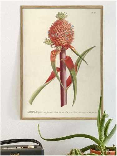 Red Pineapple Botanical Print 30 X 40 Cm Pine Frame DécorArt And PrintsPaintings And Prints