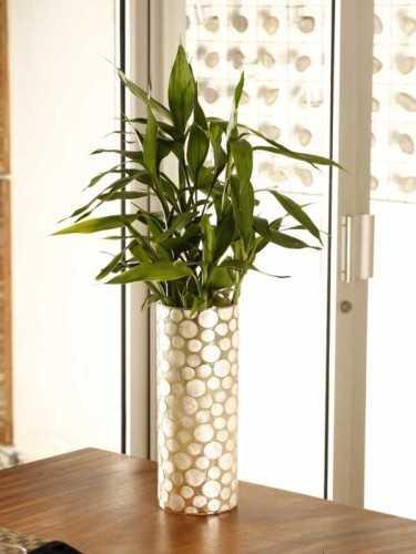 Vas Silinder Toquer White Capiz DécorHome DecorationsVases