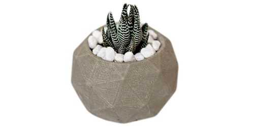 Foto produk  Ball Concrete Pot With Real Succulent di Arsitag